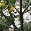 [今日の園芸]ついに目前。念願の「お庭でとれたて野菜」。