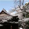 本日24日に東京の桜が満開に!!統計開始以来3番目の早さ!!