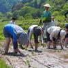 田植えと夏野菜の植え付け。2017年の百姓塾はじまりました!:飯山市百姓塾5月講座