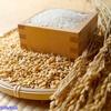 乳酸菌【K-1株】はお米由来の乳酸菌|便秘や大腸ガンの予防に効果的だって!