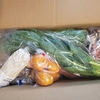 今年のわが家の野菜生活