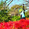 荒サイ満喫!!榎本牧場〜さくら堤公園〜ホンダエアポート〜cafeVIA…彼岸花の絶景を目指せ100kmライド!