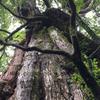 屋久島の自然を満喫したゴールデンウイークの旅行