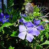 赤い花・青い花 〜わが家の花たち〜