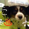 足の裏をなめる犬のための足湯講座・厳選6湯