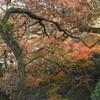紅葉の鎌倉―化粧坂