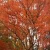 晩秋の俣野別邸庭園