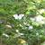"""待ちに待った夏鳥 """"サンコウチョウ""""と一年振りに再会……   野鳥撮影《第219回目》"""