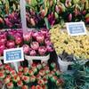 コロンビアロードフラワーマーケット(Columbia Road Flower Market)で観葉植物を買う