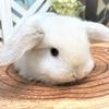 めちゃかわ!ウサギ&モモンガちゃん☆
