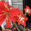 4輪開花中🌸