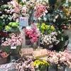 《本店3階》東京堂にサクラ、咲き始めました✿