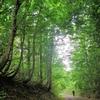 静かな林道を行く