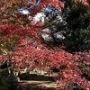 【京都へ行こう】紅葉ときぬかけの路
