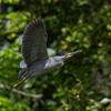 2019年4月30日-5月1日の鳥撮り-近場