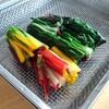 はじめましてのお野菜「スイスチャード」