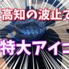 【フカセ釣り】高知で特大のアイゴをゲットだぜぃ!