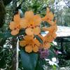 世界遺産キナバル自然公園1日ツアー