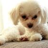 犬の涙やけの原因・対処法や涙やけに効果があるおススメ食材15選
