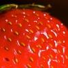 イチゴ好きが加速していく件