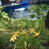 ユリに似た花は…