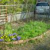 ミックスフラワー花壇 その後