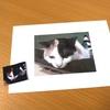写真を印刷できるプラ板で、猫のミルちゃんキーホルダー作りに挑戦 【ダイソーで揃う】