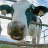 干支「丑年(牛)」の意味と2021年コロナ禍ですべき2つのこと