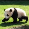 【日焼け】パンダの如く