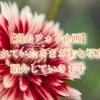 【過去フォト企画】花を見つめて