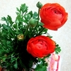 お花を育てよう🌷