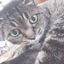 主婦shcatのつれづれ日記(整理収納アドバイザーになりました!)