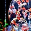 アートアクアリウム展(2019)日本橋:明暗と金魚