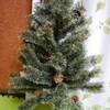 クリスマスツリーを買いました。