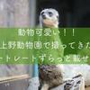 上野動物園で撮ってきたポートレートずらっと載せる!