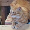 【神奈川旅】三崎港・城ヶ島は猫の街!?東京から1時間でネコに癒されに行ってきた🐈