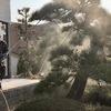 松の消毒 2019