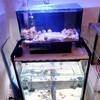 初めて海水魚を飼う時の注意点