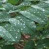 樹の下で雨が降る