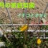 4月の家庭菜園【イチゴとネギとミニトマト】