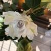 河本バラ園のガブリエルが咲き始めた
