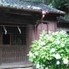 【鎌倉女子旅⑤】そうだ!あじさいを見に行こう。~やっぱり雨。それでもいいの。鎌倉・江ノ島パスで乗り鉄全開モード⁉~
