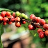【まとめ】美味しいコーヒーが出来るまで。沢山の人から手掛けられた最高の一杯。