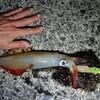 野北漁港で冬のイカ釣り。邪道エギとスッテの夜釣りで満足のイカ15杯。