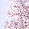 桜を10倍面白く愛でる〜古典文学編〜