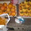渋柿、皮むき、吊るし柿