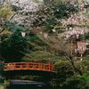 九州・中国の桜 ~ 1
