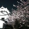 夜桜もいいですね~(^_-)-☆城山公園
