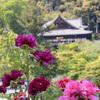 長谷寺にぼたんを撮りに行ってきました その2 その他の花も