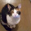 うちの猫を紹介します